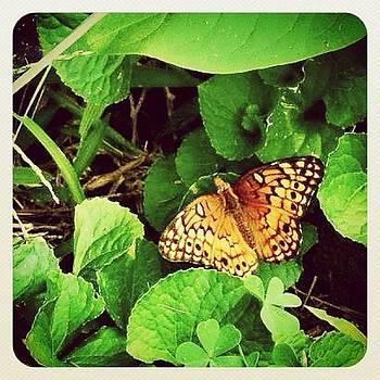 #butterfly #earlybird #earlybirdlove by Robyn Montella