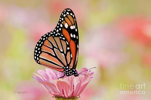 Regina Geoghan - Butterfly Garden III