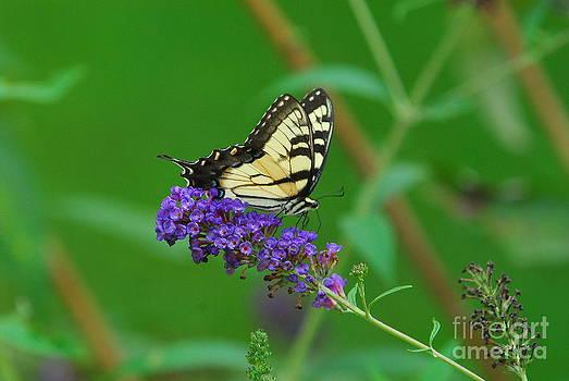 Butterfly I by Curtis Brackett