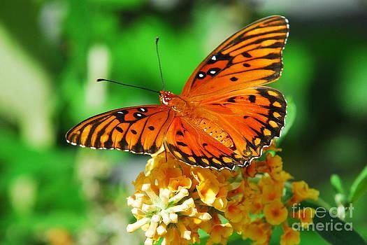 Butterfly III by Curtis Brackett