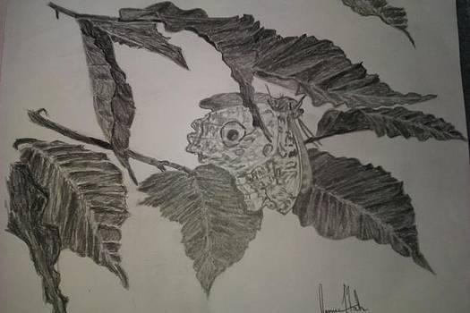 Butterfly by Jamie Mah
