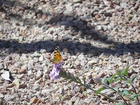 Butterfly by Jonathan Barnes