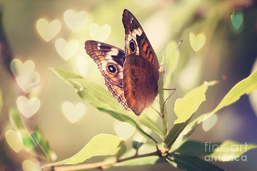 Butterfly Kisses by Beth Engel