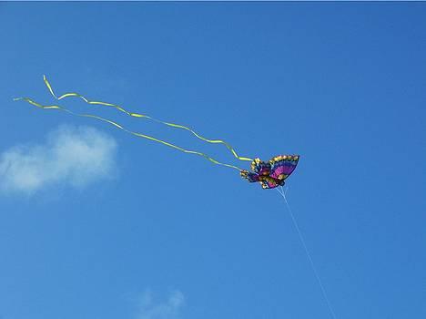 Butterfly Kite flying in the Blue Sky by Sharon Spade - Kingsbury