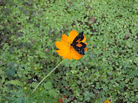 Butterfly Landing by Margaret Carruth