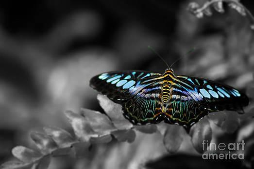 Butterfly landing by Saajid Abuluaih