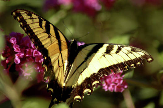 LeeAnn McLaneGoetz McLaneGoetzStudioLLCcom - butterfly