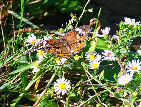 Scott B Bennett - Butterfly/Moth
