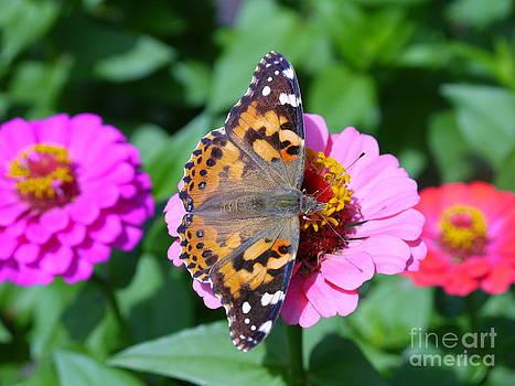Butterfly by Nancie DeMellia