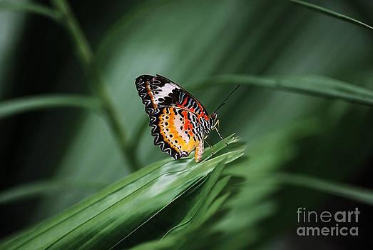 Butterfly on a leaf by Saajid Abuluaih