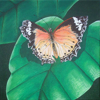 Butterfly On Leaf by Brandy Gerber