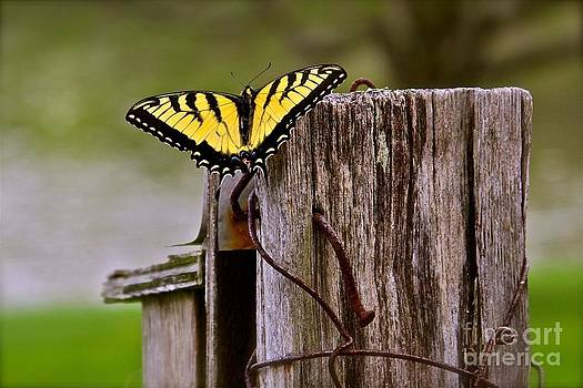 Butterfly on the Fence by Mark East