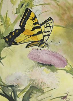 Butterfly on Thistle by Marlene Petersen