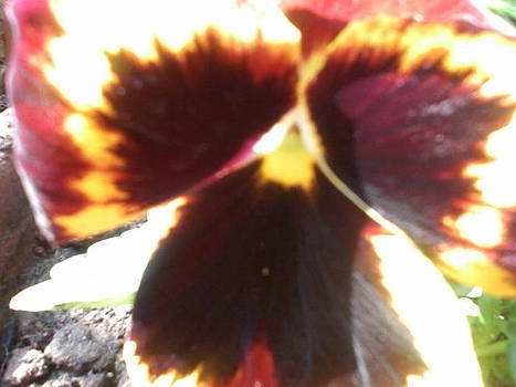 Butterfly or flower by Amisha Tripathy