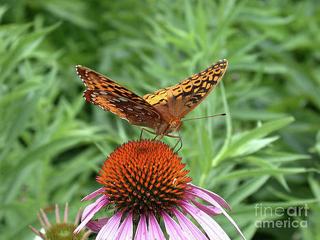 Tim Mulina - Butterfly pitstop