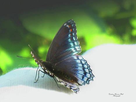 Darlene Bell - Butterfly Portrait