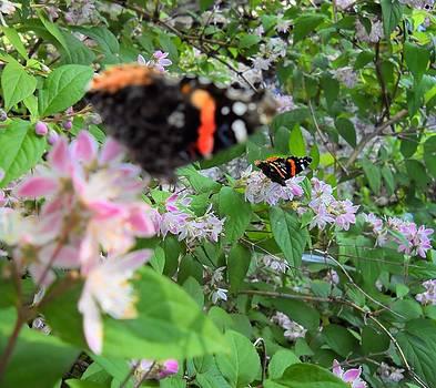Lynnette Johns - Butterfly Reflection