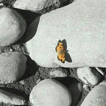 #butterfly #riverrocks #color by Laura Vaillancourt