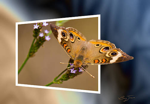 Butterfly Stepping Out by Barry Jones
