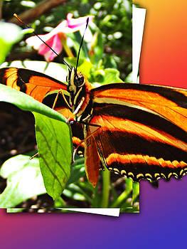Butterfly Stripes 2 by Robin Hewitt