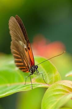 Butterfly Study I by Floyd Menezes