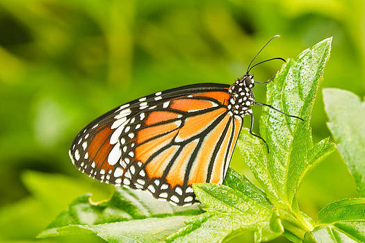 Butterfly Thailand by Chatchawin Jampapha