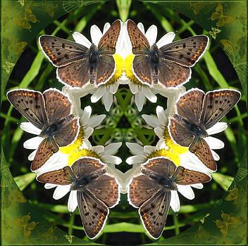 Butterfly transformation by Brigita Tekavcic