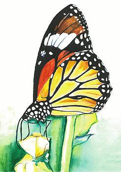 Butterfly by Vijayendra Bapte