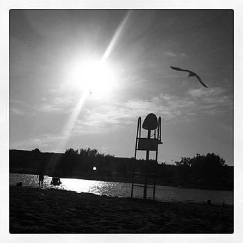 #bw #blackandwhite #seagull by Ange Exile DuParadis