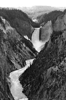 BW Yellowstone by Lindsey Cockrum