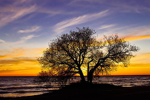 By the lake by Matthew Larsen