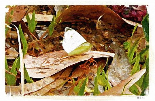 Cabbage White Butterfly by Brian D Meredith