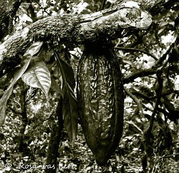 Cacao Bean by Rosa Mahabir