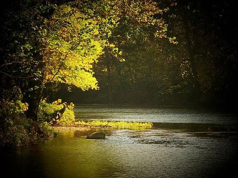 Cacapon Autumn tree by Joyce Kimble Smith