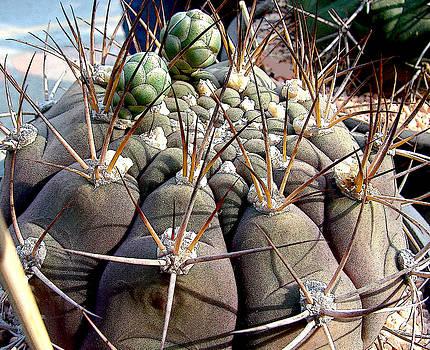 Roy Foos - Cactus Delight