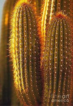 Diane Kurtz - Cactus