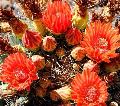 Cactus Flower 8 by M Diane Bonaparte