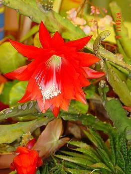 Cactus Flower Bloom by Thomas D McManus
