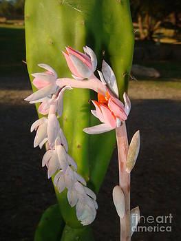 Cactus Flower by Catherine DeHart
