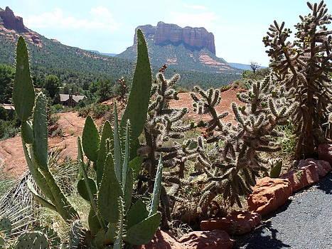 Cactus of Arizona by Ivana Smiljanec