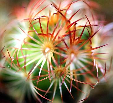 Cactus by Shiladitya Sinha