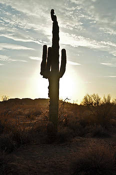 Cactus sunset by Kenny Jalet
