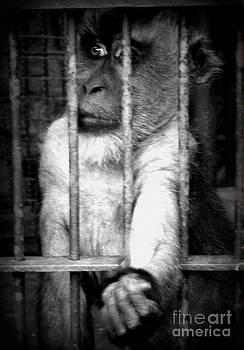 Shawna Gibson - Caged III