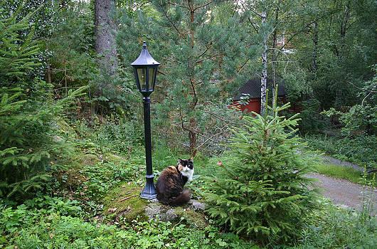 Nina Fosdick - Calico Cat