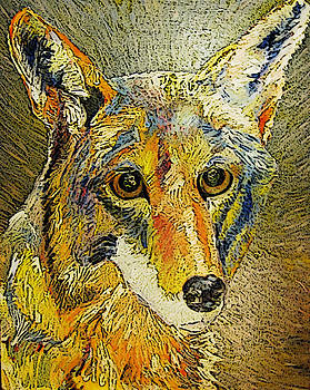 Calico Coyote by Jennifer Choate