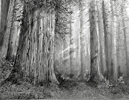 Jim Hubbard - California - California Redwood