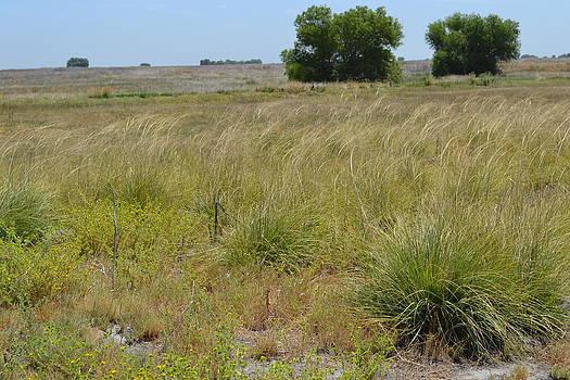 California Grasslands by Bob Rowell