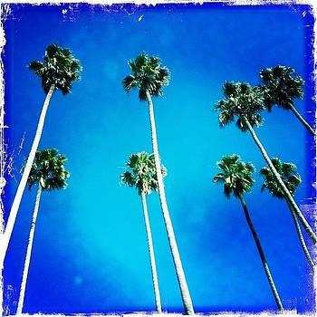 California Palm Trees by Chris Fabregas