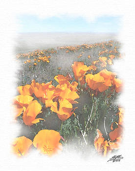 Steve Huang - California Poppies