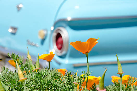 Margaret Pitcher - California Poppy